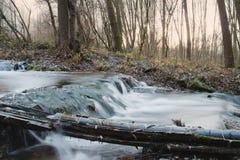 Forest Creek imagen de archivo libre de regalías