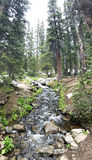 Forest Creek Immagine Stock Libera da Diritti