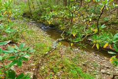 Forest creek in autumn. Royalty Free Stock Photo