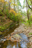 Forest creek in autumn. Royalty Free Stock Images