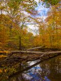 Forest Creek in Autumn, Pennsylvania Woodland, Ridley Creek State Park Royalty Free Stock Image