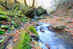Forest creek autumn water mountain river landscape Royalty Free Stock Photos