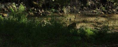 Forest Creek Detail stock afbeeldingen