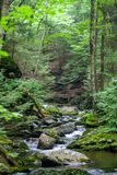 Forest Creek en bosque verde enorme Fotos de archivo