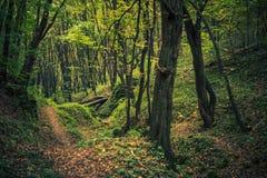 Forest Creek escénico fotografía de archivo