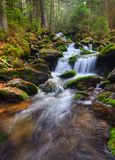 Forest Creek. Fast flowing mountain creek in the national park Stock Image