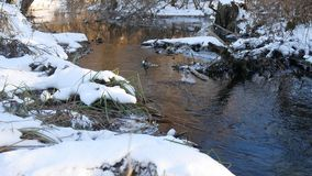 Forest creek flowing grass in the forest late beautiful winter nature landscape dry tree branches. Forest creek flowing grass in forest late beautiful winter stock video footage