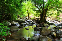 Forest creek. Landscape Forest creek in thailand Royalty Free Stock Images