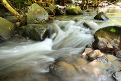 Forest creek Stock Image