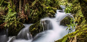 Forest creek. A long exposure of a cascading forest creek in New Zealand`s North Island Stock Photography