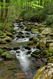 Forest Creek moussu Photos stock