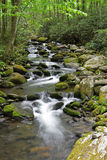 Forest Creek moussu avec de l'eau soyeux Photos libres de droits