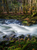 Forest creek. Forest river nature natural environment long exposure Royalty Free Stock Photography