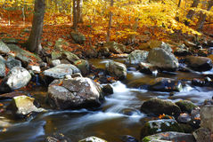 Forest Creek with Rocks royalty free stock photos