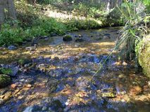 Forest Creek Stock Photography