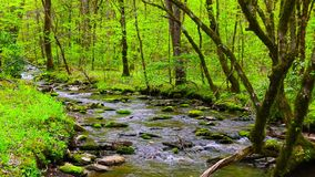 Forest creek running over moss covered rocks. Spring landscape. stock video footage