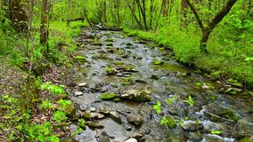 Forest creek running over moss covered rocks. Spring landscape. stock footage