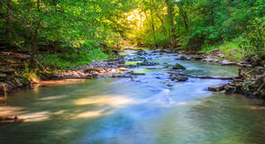 Forest creek. Scenic view of a creek in the forest near Pleasant Hill, Kentucky Stock Photos