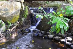 Forest Creek. Stock Photography