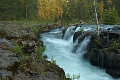 Forest Creek. Small Waterfall, Oregon, USA Royalty Free Stock Photography