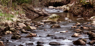 Forest creek Royalty Free Stock Photo