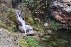 Forest creek on a sunny day Stock Photos
