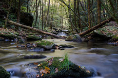 Forest Creek tranquille Image stock