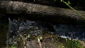 Forest creek among tree branches. Boiling water stock video footage