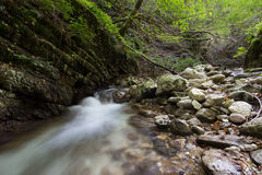 Forest creek Royalty Free Stock Photos