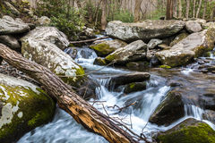 Forest creek. Stock Image