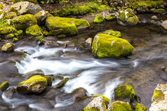 Forest creek. Royalty Free Stock Image