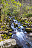 Forest creek. Royalty Free Stock Photo