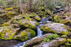 Forest creek. Royalty Free Stock Photography