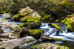Forest creek. Stock Photo
