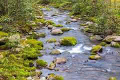 Forest creek. Stock Photos