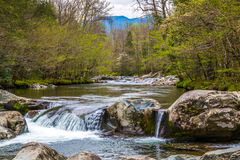 Forest creek. Stock Images