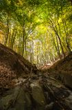 Forest creek Stock Images