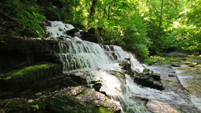 Forest creek and waterfall stock video footage