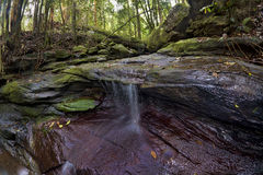 Forest Creek Waterfall tranquille Photos stock