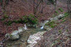 Forest creek waterfalls Stock Photos