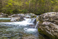 Forest creek with waterfalls. Royalty Free Stock Photo