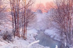 Forest creek in winter forest. Winter landscape of snow covered forest and flowing stream at sunrise Stock Photography