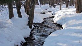 Forest creek, winter stock video
