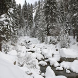 Forest Creek in Winter at Sequoia National Park. California Royalty Free Stock Photos