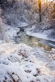 Forest creek after winter storm Royalty Free Stock Photography