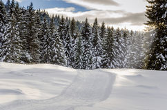 Forest Cross-country Skiing Track Royalty Free Stock Photo
