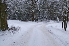 Forest crossroads winter. The photo shows the forest road fork. It`s winter. Earth and tree branches cover layer of snow. The surface of the road is unpaved Stock Image