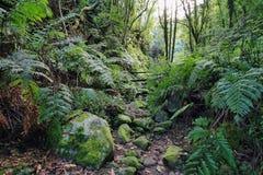 Forest in Cubo de la Galga Royalty Free Stock Photo
