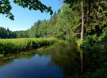 Forest Current Of The River Rospuda. Stock Photography