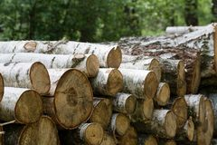 Forest cut, cut pine, birch tree logs arranged in order in cubic Royalty Free Stock Image